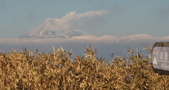達磨山-fj1.jpg